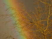 South Molton Rainbow