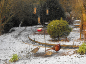 Birds enjoying the feeder in the snow