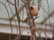 Various birds in the desert in Paignton Zoo
