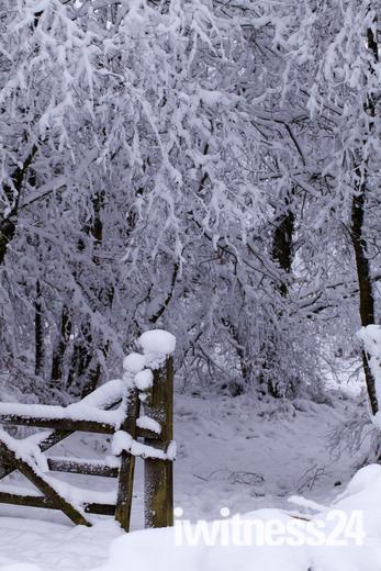 Honiton in the snow