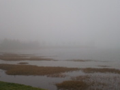 Foggy on the river