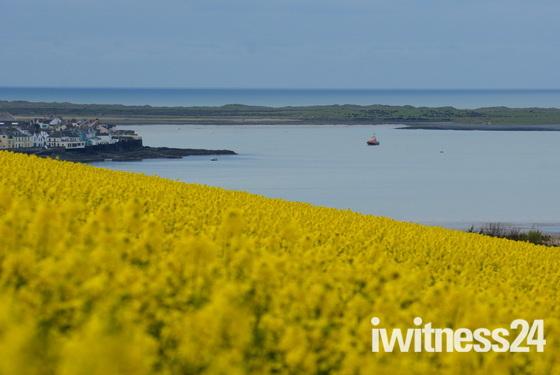 Springtime in North Devon