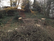Trees cut down at Castle Mound, Barnstaple