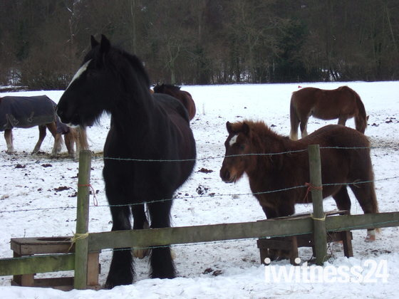 Cold Hooves