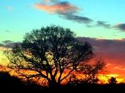 Nailsea - Oak between the lights - February 23rd
