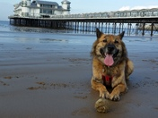 aggie and weston pier