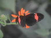 North Somerset Butterfly House