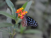 Seasons End at North Somerset Butterfly House