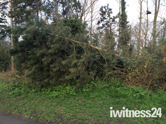 Trees damaged by strong winds