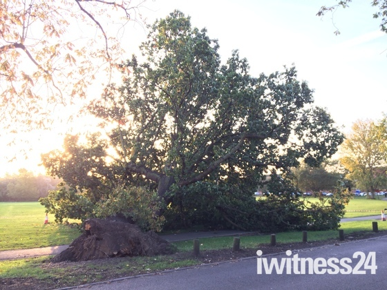 Large tree blown down in Hornchurch storm
