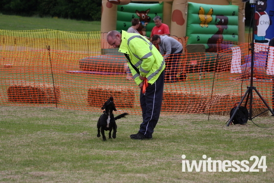 Havering Happy Hounds Show 2013