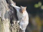 Squirrel in Valentines Park