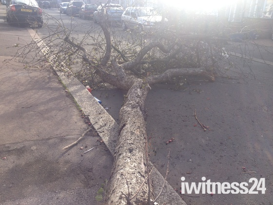 Severe Storm Winds Damage