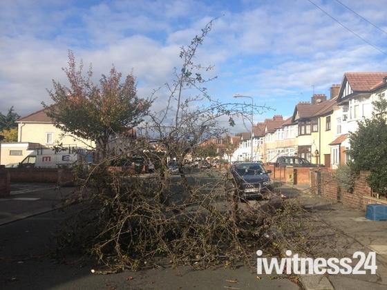 Severe Storm Winds Damage