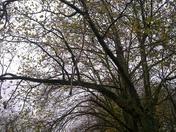 BARKING PARK -LONDON