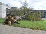 Tree down in storm in Barkingside