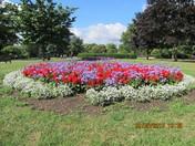 Flowers in Valentines Park