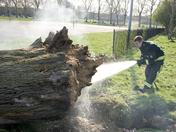 Tree Fire in South Millfields Park