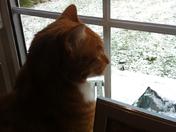 Eddie Cat looks at snow in the garden