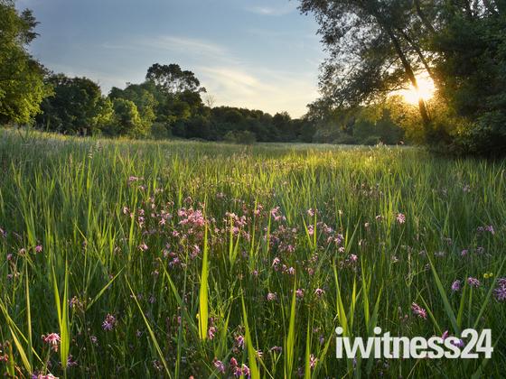 Wildflowers at Newbourne Springs
