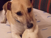 My friends Jack Russell