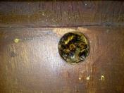 Bees in a bird box