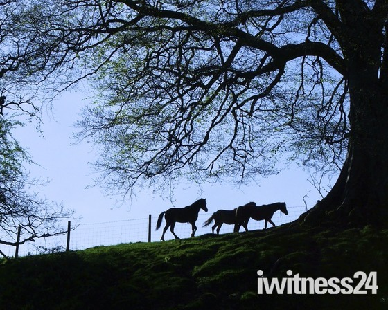 Ponies and Trees