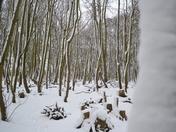 Wintery Woods