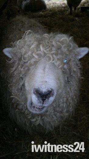 Baylham Rare Breeds Farm