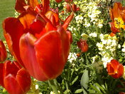 A sea of colour at The Abbey Gardens, Bury St Edmunds