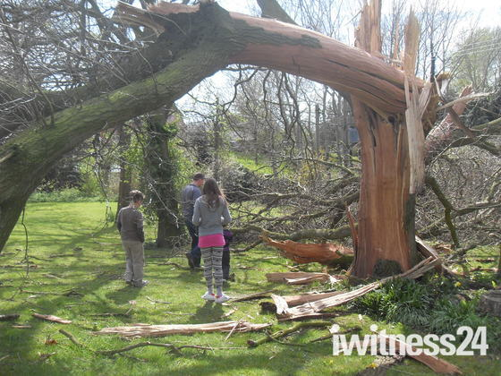 Oak Tree struck by lightning