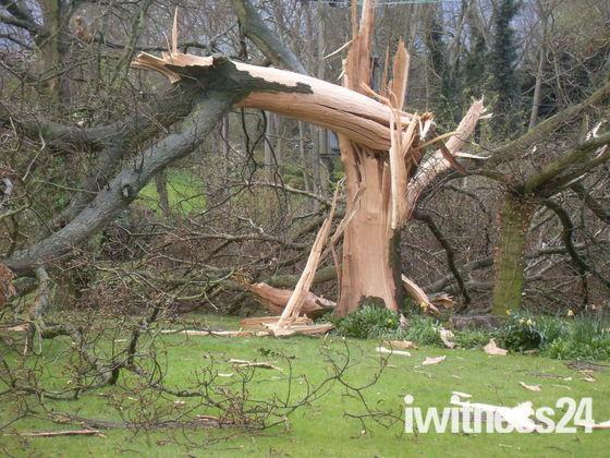 Oak Tree struck by lightning