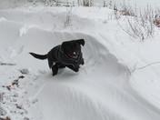 Bella in the snow