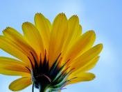 Sunshine Flowers and blue skies