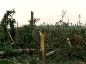Rendlesham Forest hurricane 1987