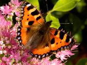 Butterfly enjoying the sunshine