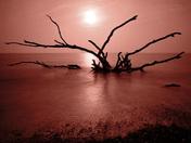 Kessingland Tree