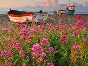 Boats in bloom