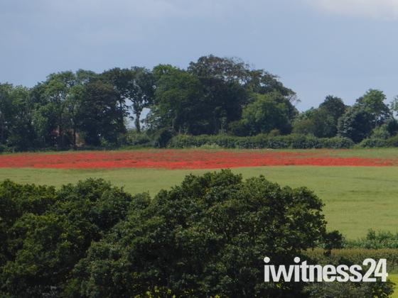 Wiveton Downs views