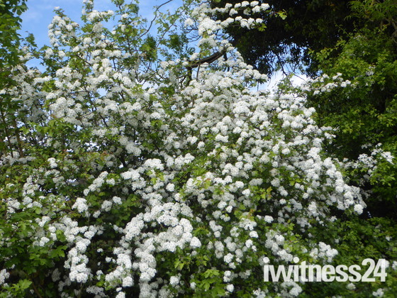 Stunning Hedgerows