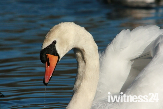 Taken at whitlingham great broad
