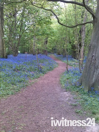 Bluebell Woods,Bradwell,Great Yarmouth
