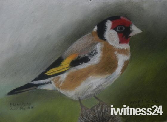 my wildlife drawings using pastel