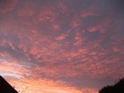 SUNRISE MORNING GLORY