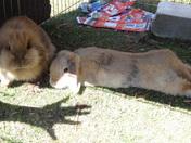2 hot rabbits