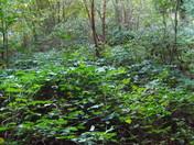 Thorpe Wood (Series 2)