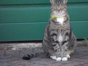 Handsome   (a neighbours cat)