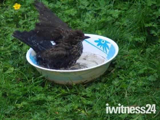 BATHTIME FOR BLACKBIRD