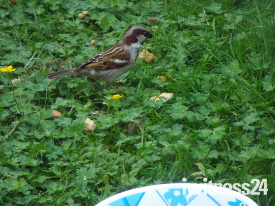 More SPARROW pictures,