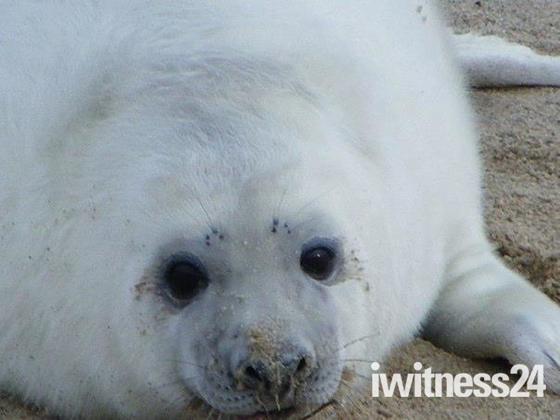 Cute Seal On Horsey Beach